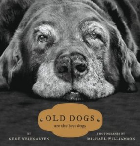 Old Dogs Are Best Dogs